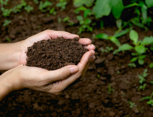 Happy Garden Soil makes Happy Plants
