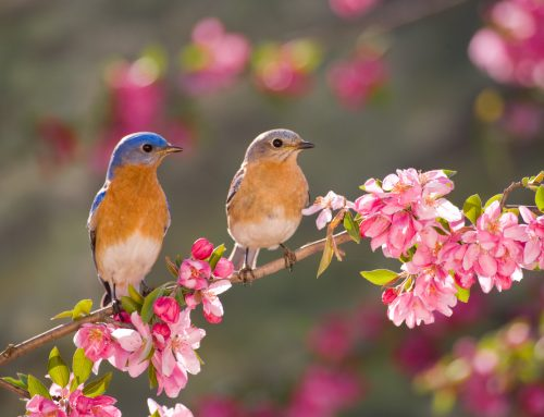6 Bird-friendly Botanic Gardens, Coast to Coast!
