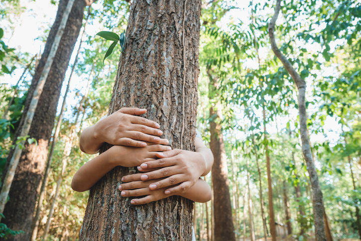 Parent and child give a hug to the old tree in the tropical forest, save the forest for the future