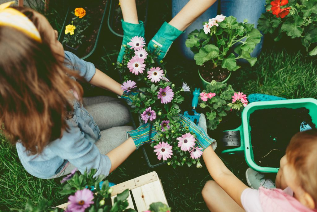 Mother and daughters planting flowers in a backyard. Close up of their hands in flowerpot planting flowers together.